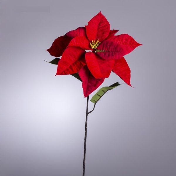 Stella Natale Ramo