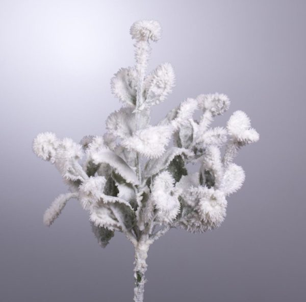 Ramo Salvia Ghiacciata