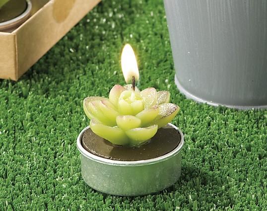 Set 6 candele segnaposto pianta grassa