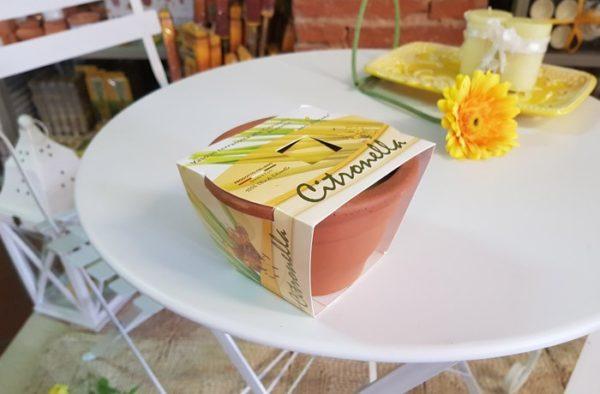 Vaso in terracotta con citronella
