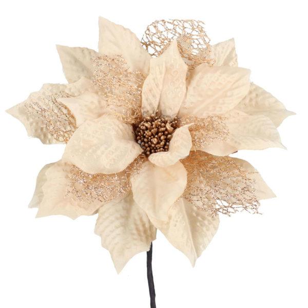 Fiore Stella Di Natale Champagne
